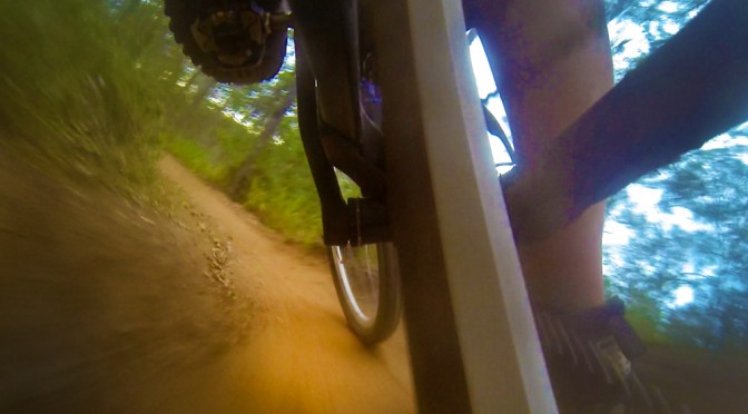Dingo MTB trail